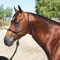 Professional's Choice Clinician Rope Halter With Lead