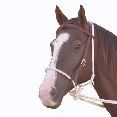 Mustang Mfg. Training Bridle With Reins