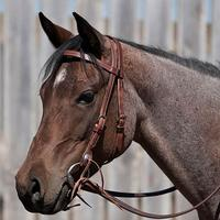 Dennis Moreland Doubled & Stitched Browband Headstall