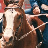 Martin Saddlery Original Bozo Sidepull