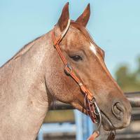Martin Saddlery Slip Ear Leather & Rope Headstall