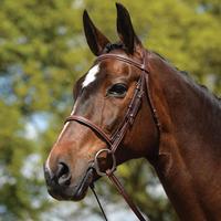 Kincade Raised Padded Fancy Stitched Quarter Horse Size Bridle