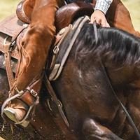 Classic Equine ESP Felt Top Pad 31