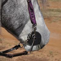 Classic Equine Carol Goostree Twisted Pickup Bit