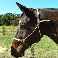 Wigwam Deluxe Rope Tied Halter With Lead