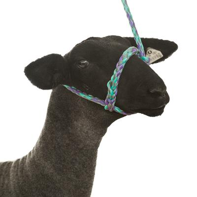 Poly Rope Sheep Halter
