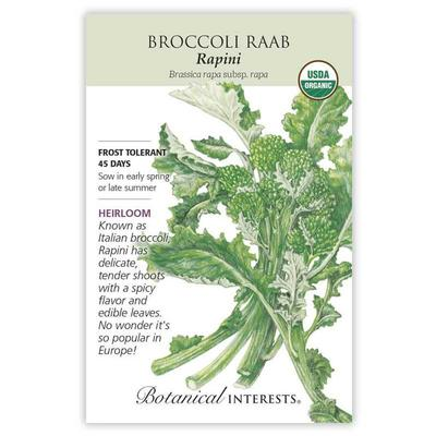 All Seasons Feeders Inc.Organic Rapini Broccoli Raab Seeds