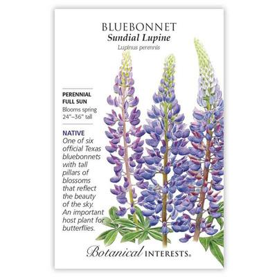 Botanical Interest Sundial Lupine Bluebonnet Seeds