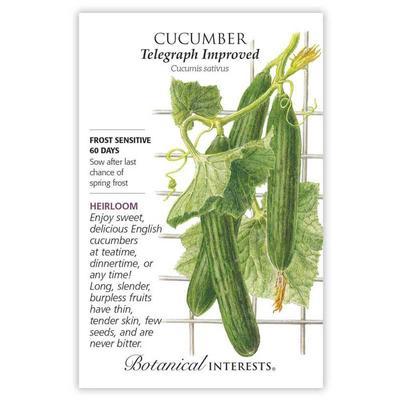 Botanical Interest Telegraph Improved Cucumber Seeds