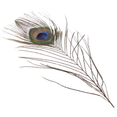 Austin Accent's Peacock Eye Loose Feather