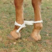 Equibrand Mule Tape Hobbles